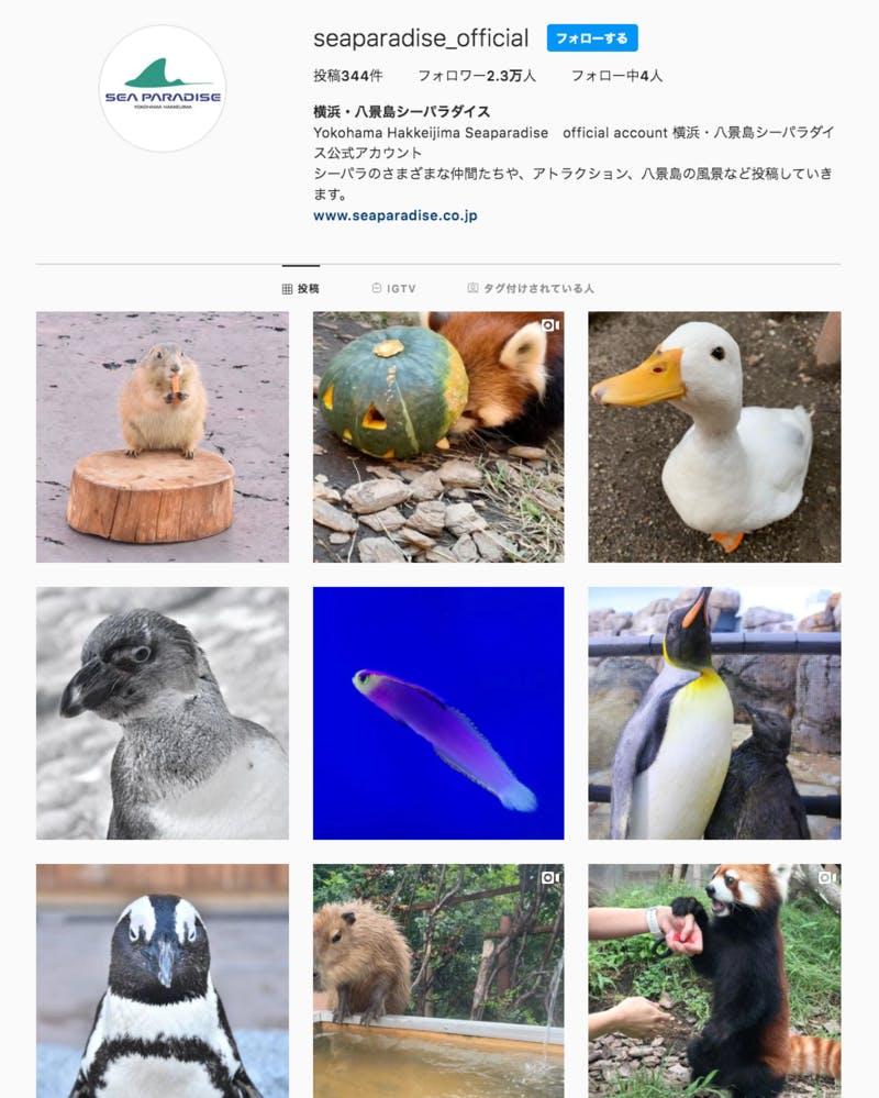 動物の写真が並ぶインスタグラムのトップページ