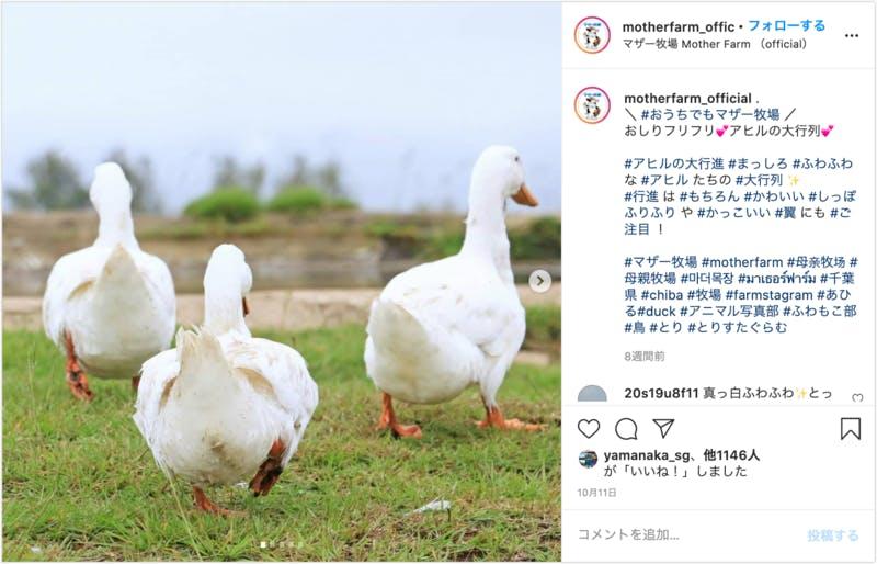 マザー牧場 Instagram