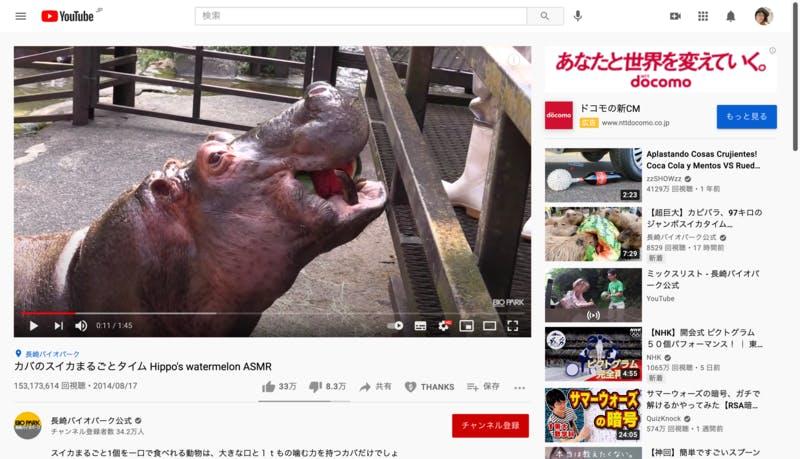 カバがスイカを食べる動画長崎バイオパーク公式チャンネル